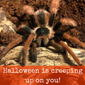 $75 September Special - Colombian Giant Red-legged Tarantula