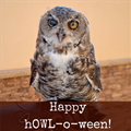 $75 October Special - Great Horned Owl